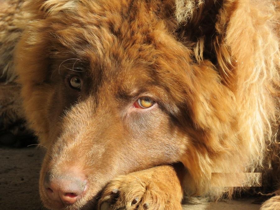 Más de 450 mil mascotas han sido inscritas durante la pandemia: perros son los favoritos